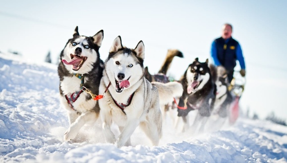 the-dog-sledding_579x328_ac6